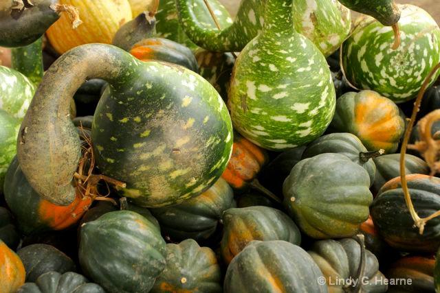 Roadside Gourds in Virginia