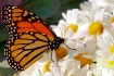 Butterfly, Autumn