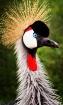 """""""Zoo Bird""""..."""