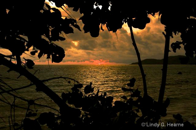 Sunset Through Vieques Trees