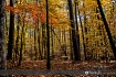 Fall colors 12