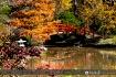 Fall colors 06