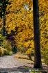 Fall colors 03