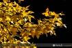 Fall colors 01