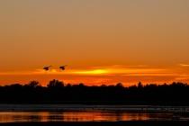 Sandhill Sunset