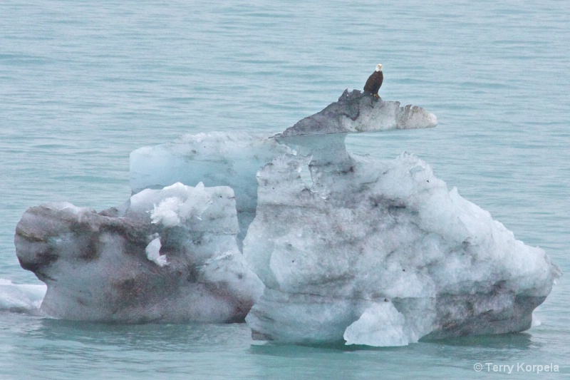 Iceberg or Bald Eagle's town house - ID: 13592159 © Terry Korpela