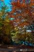 Fall colors 19