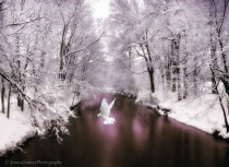 Photography Contest Grand Prize Winner - December 2012: Peace on Earth