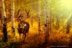 antlers 'n as...
