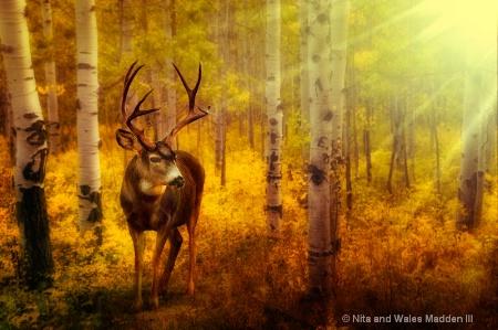 antlers 'n aspen