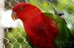 Pretty Red