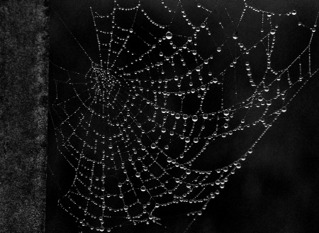 Dew in a Web