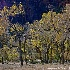 © Hsiao-Tung Yang PhotoID # 13605923: Dancing on The Trees