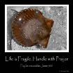 lifes fragile