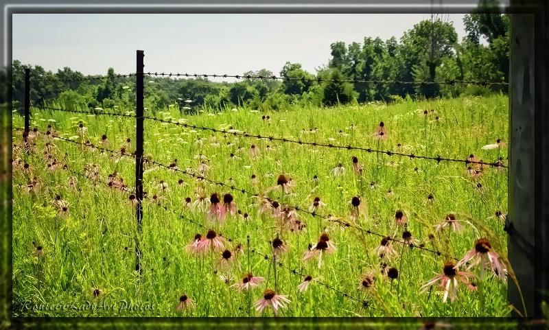 Field in Bloom - ID: 13611439 © JudyAnn Rector