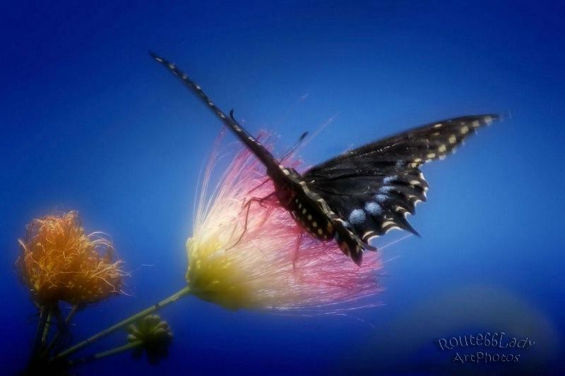 Flutterbye - ID: 13611440 © JudyAnn Rector