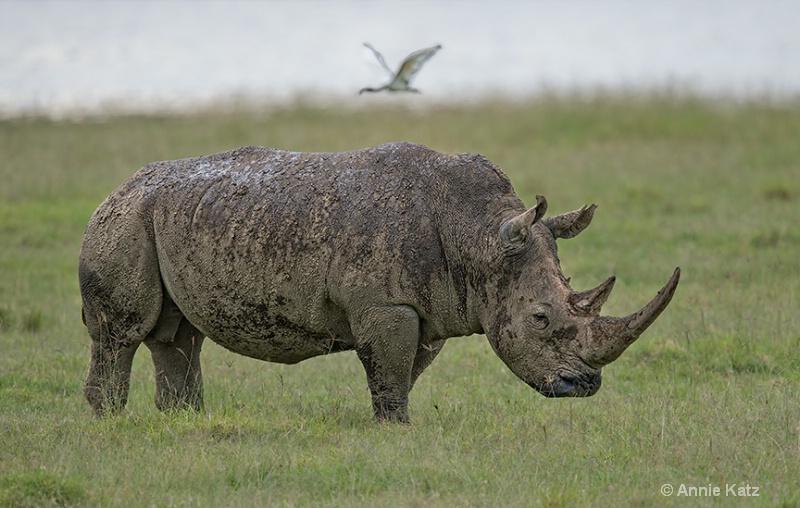 white rhino momma - ID: 13615154 © Annie Katz