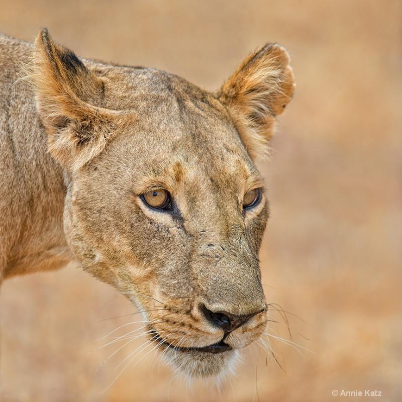 the stare - ID: 13615271 © Annie Katz