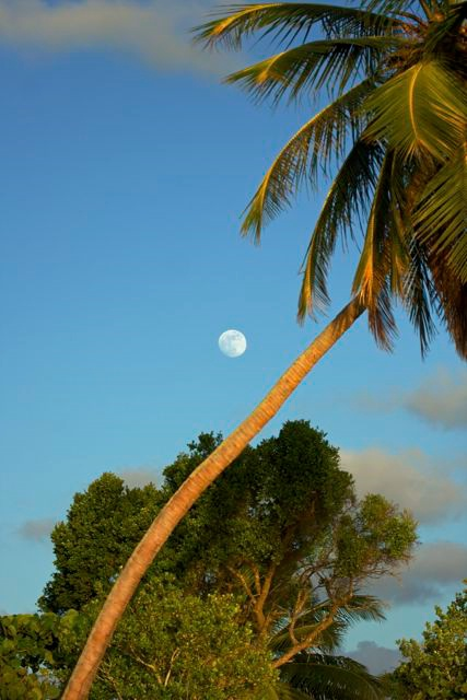 Moon Over Palm
