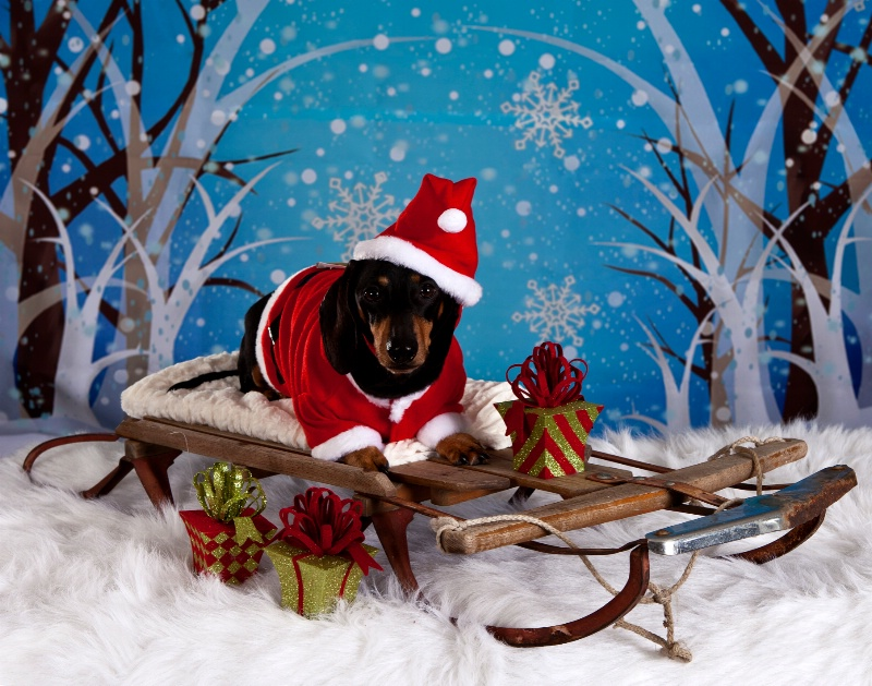 Doxie Clause