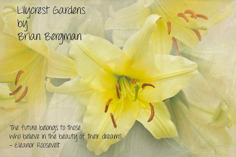 Lilycrest Gardens 2012 - ID: 13623048 © Marilyn Cornwell