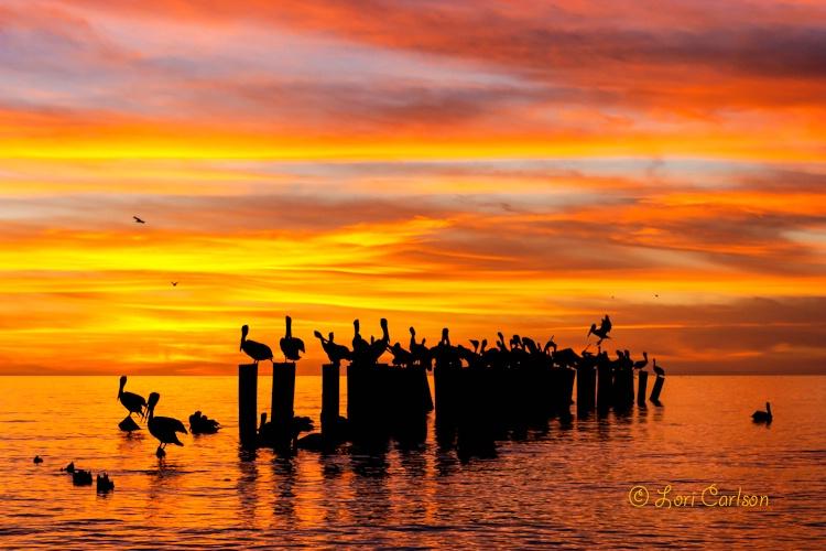 Sunset Social