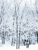 ~ New Fallen Snow...