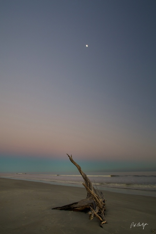 Driftwood Moon