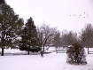 ~ More Snow ~