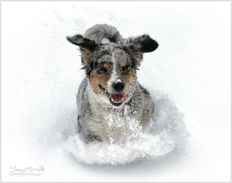Snow Dogging