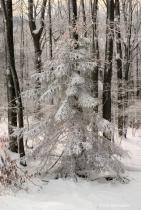 'Winters Blanket'