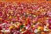 field of cultivat...