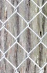 Fenced Bark
