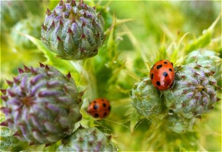 Ladybird, Ladybird Fly Away Home