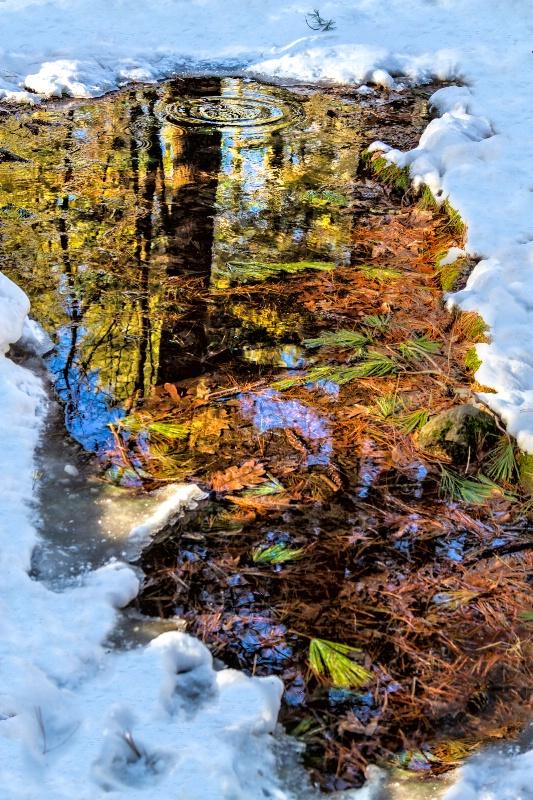 Winter Walk - ID: 13634872 © Karen Celella