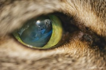 Cats eye revisited
