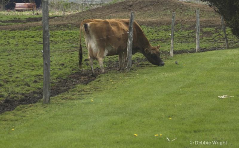 Greener grass - ID: 13648007 © deb Wright