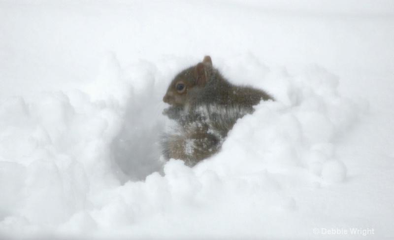 Squirrel  - ID: 13648010 © deb Wright