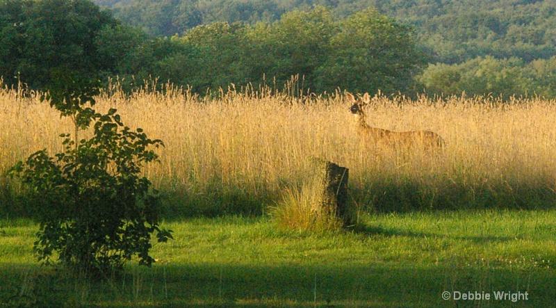 Deer in the Field - ID: 13648117 © deb Wright