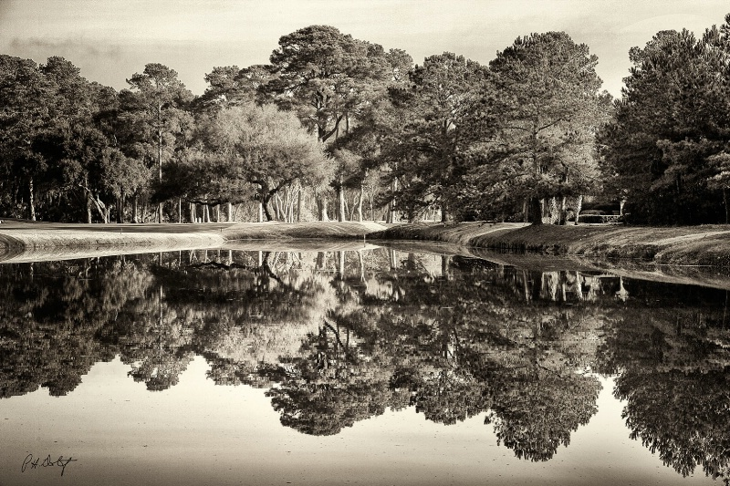 Live Oak Reflections