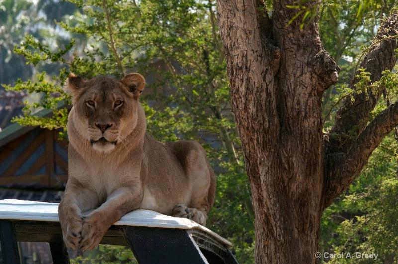 Taken at the Wild Animal Park in California, 2010.