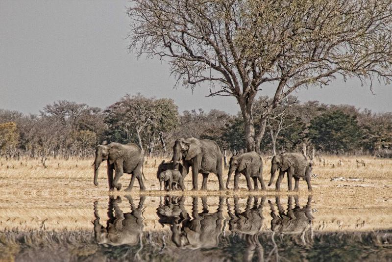 Africa - ID: 13651996 © Martha Chapin