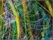 Rainbow Spider We...