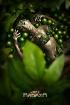 Rainforest Diva