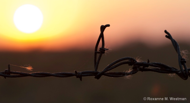 Barbed Sunset - ID: 13665364 © Roxanne M. Westman