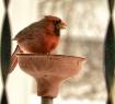~ Cardinal ~