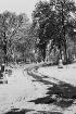 Snowy Cemetery Pa...