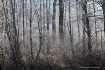 Winter Forest1