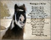 Beauty is a Horse