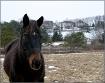 A Suburban Horse